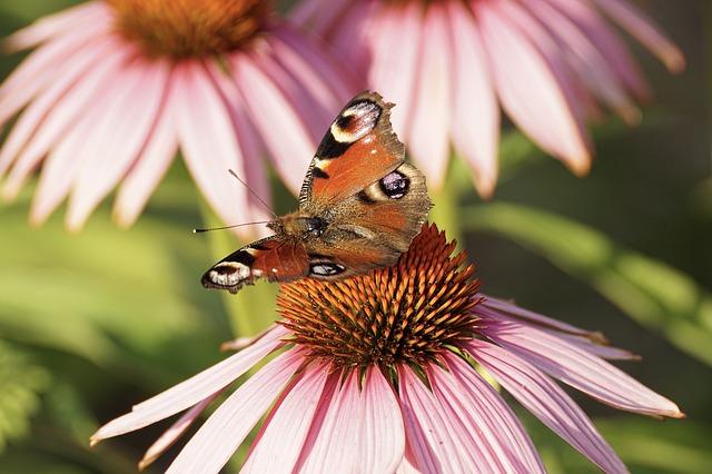 motýl na rostlině