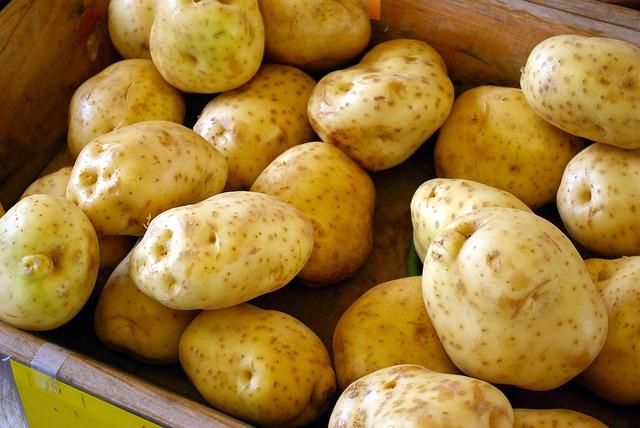konzumní brambory